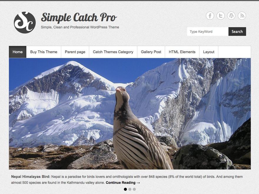 Simple Catch Pro theme WordPress