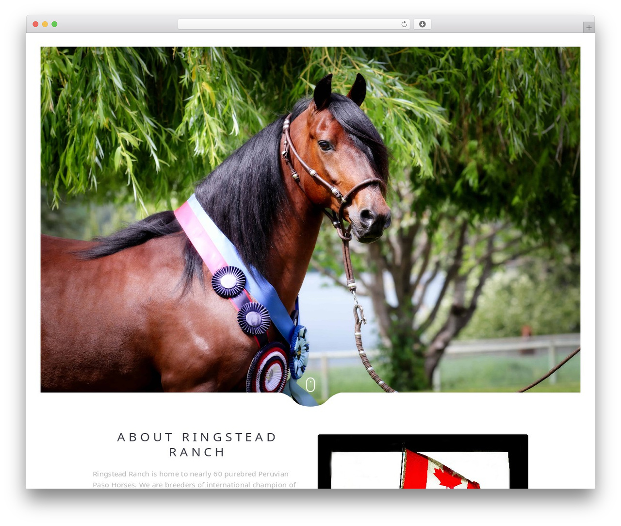 WP theme Narcos - ringsteadranch.com