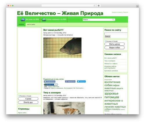 Producer template WordPress - mirzverushek.ru