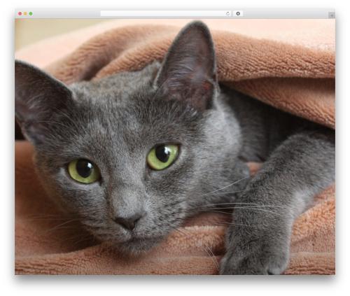Free WordPress 3D Tag Cloud plugin - mouse-jacket.cz