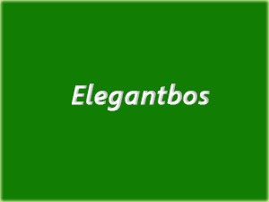 Elegantbos business WordPress theme
