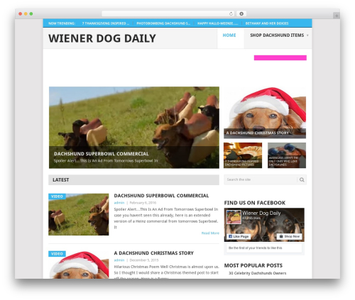 Point theme WordPress free - wienerdogdaily.com
