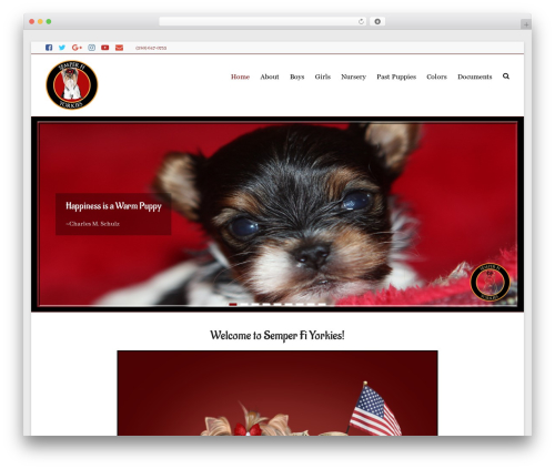 Free WordPress Social Media Widget plugin - akcyorkshireterriers.com