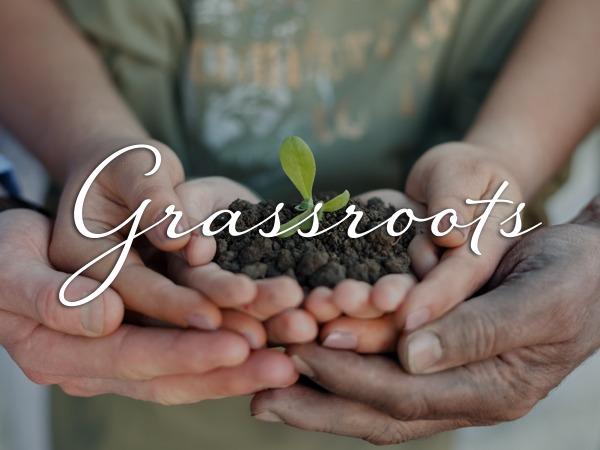 Best WordPress template Grassroots