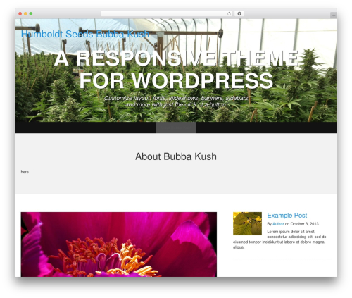 Template WordPress WP Simple - bubbakush.info