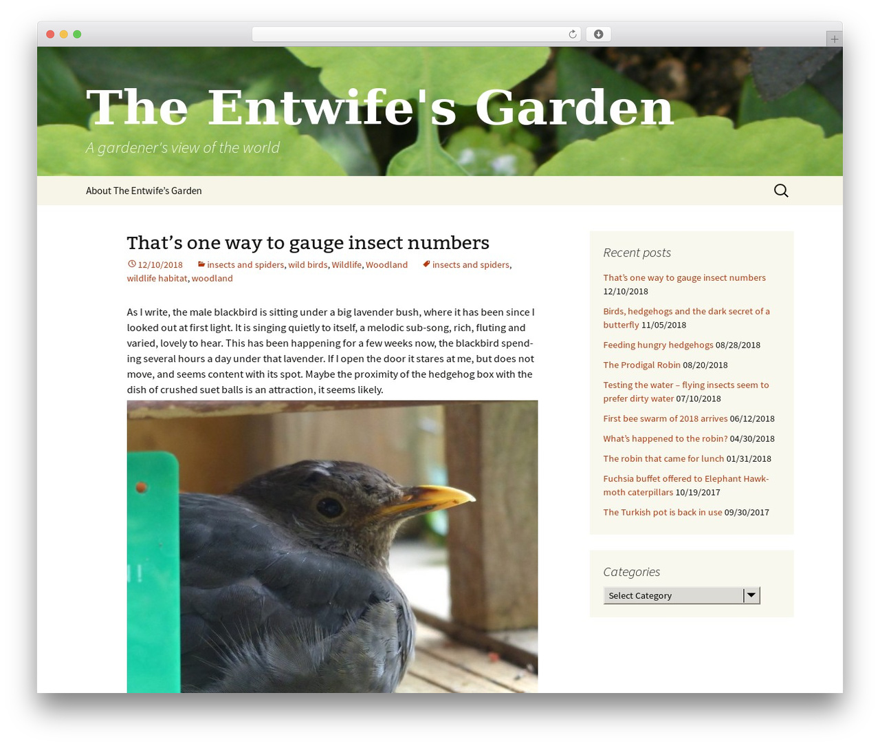 Twenty Thirteen free WP theme - entwife.org