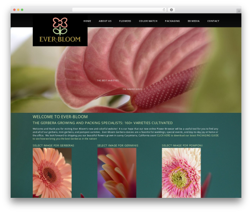 everbloom-dp best WordPress theme - ever-bloom.com