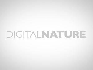 digitalnature theme WordPress
