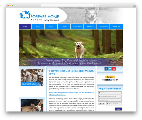 BLANK Theme WordPress website template - foreverhomedogs.org
