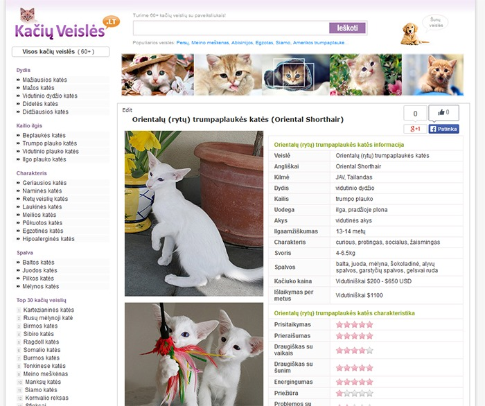 WordPress website template WPsimpy for cats