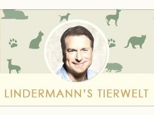 Lindermanns Tierwelt theme WordPress