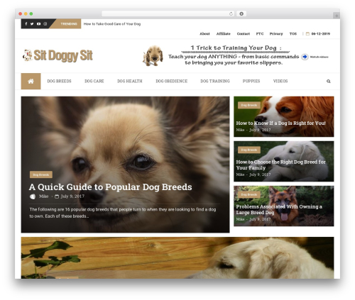 bFastMag Pro WordPress theme - sitdoggysit.com