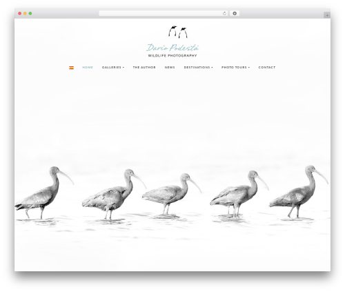 Olsen Light theme free download - dariopodesta.com