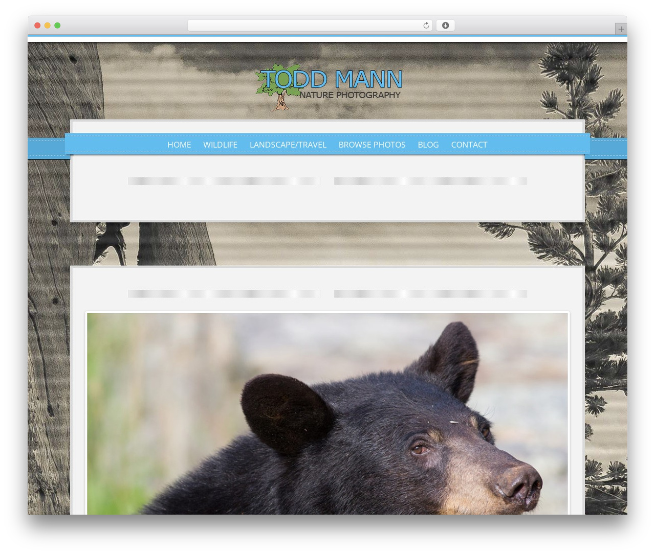 WordPress theme Impress - toddsphotos.com