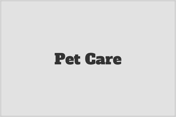 WordPress theme Pet Care