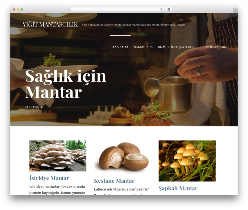Primer WordPress template free - agromantarim.com