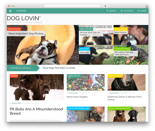 WordPress theme Codilight - dog-lovin.com