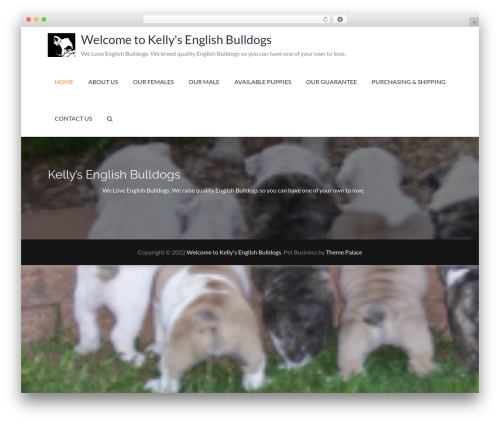 Pet Business WordPress theme - kellysenglishbulldogs.com