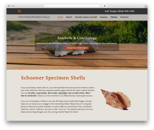 Small Business Blueprint Theme WordPress template for business - schnr-specimen-shells.com